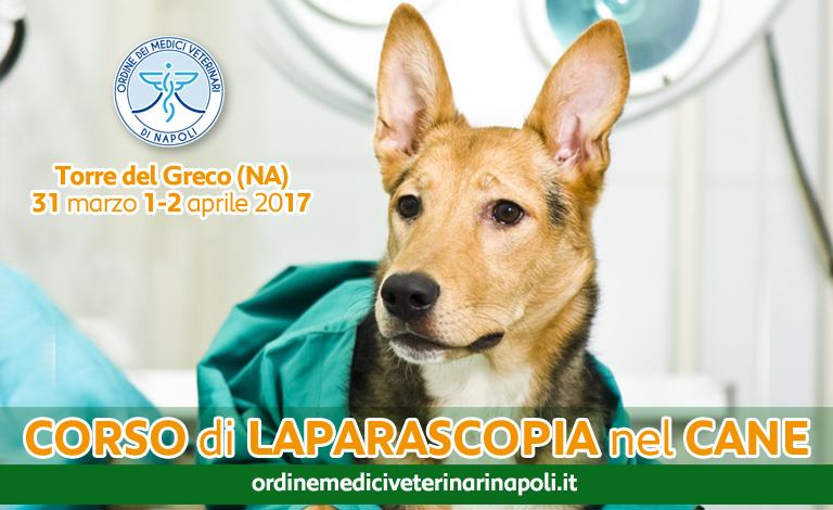 """Corso di """"Laparoscopia nel cane"""""""