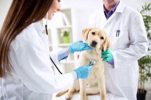 Proroga termine prescrizione medico veterinaria elettronica