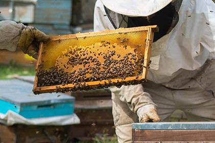 """Corso di perfezionamento """"Gestione igienico sanitaria degli apiari a salvaguardia dell'ambiente e della biodiversità"""""""