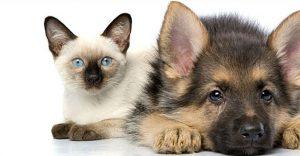Linee Guida movimentazione e registrazione nell'anagrafe degli animali d'affezione