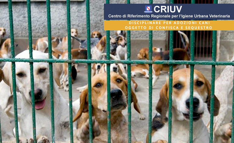 Disciplinare per adozione cani oggetto di confisca e sequestro