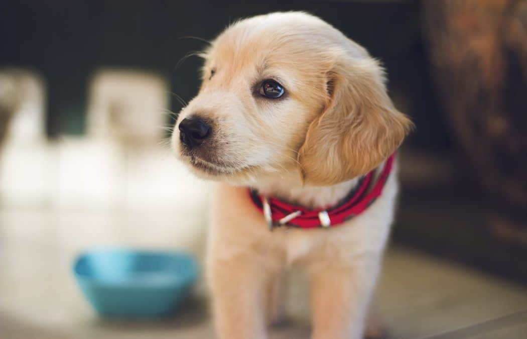 Chiarimenti su definizione di medicinale veterinario