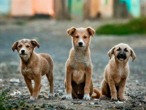 Procedura operativa per le movimentazioni internazionali di cani randagi.