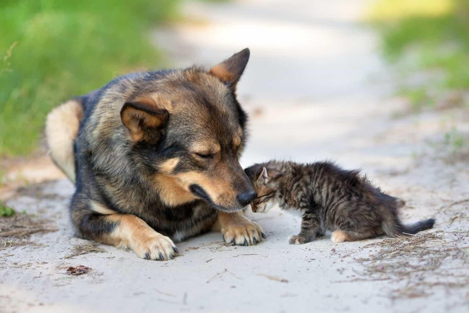 Portale Nazionale degli Avvelenamenti Dolosi degli Animali – modalità di registrazione e segnalazione